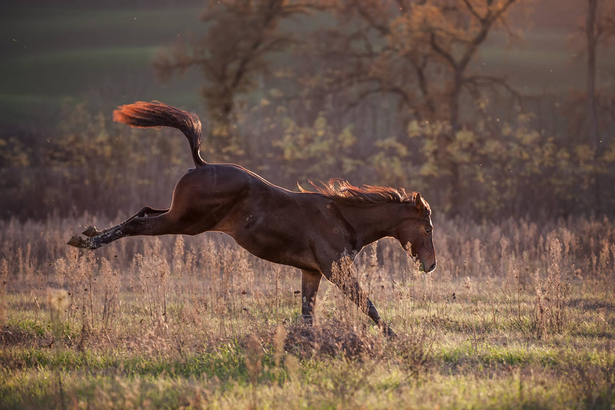 Horse kicking up its back legs and running on ranch land